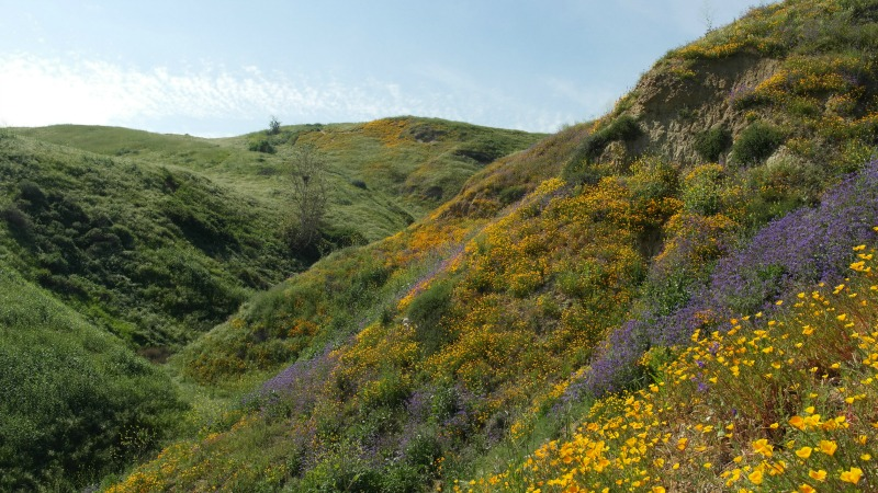 After major surgery and a twenty-day hospital stay, I needed something to help me get back on my feet. Luckily, the California Super Bloom was in full effect. I visited three separate locations to see for myself the beauty.